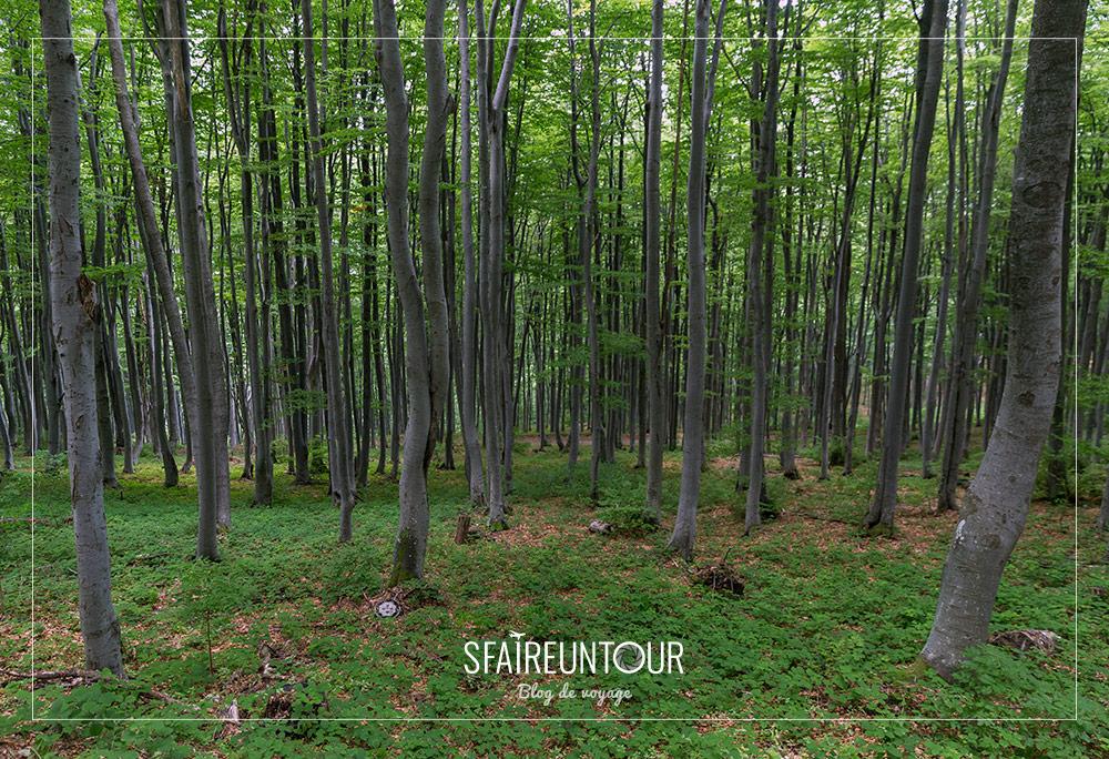 forêt de Bouzloudja