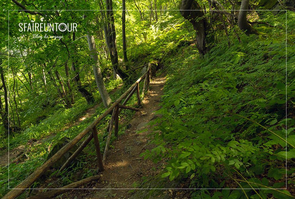forêt Vitosha 1