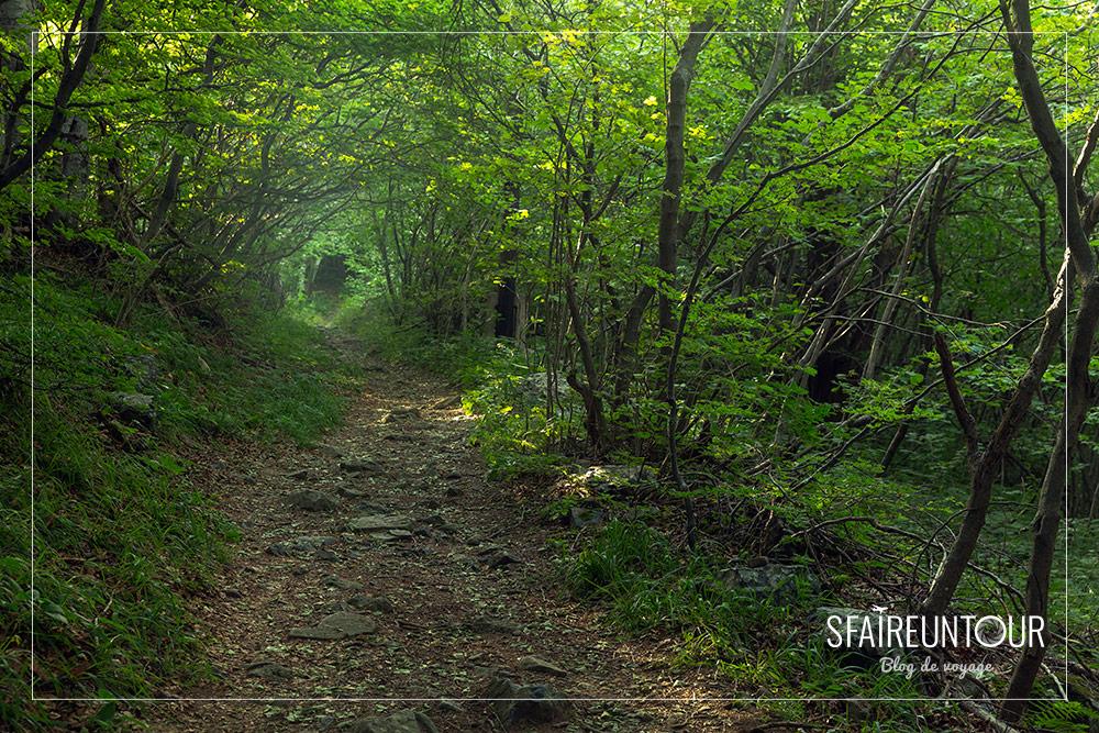 forêt Vitosha 2
