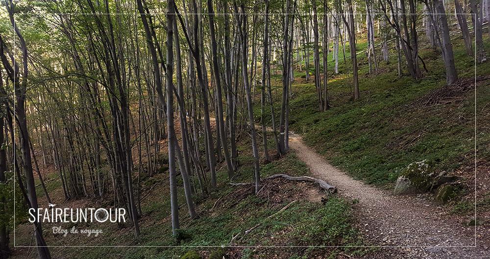 forêt Vitosha 3