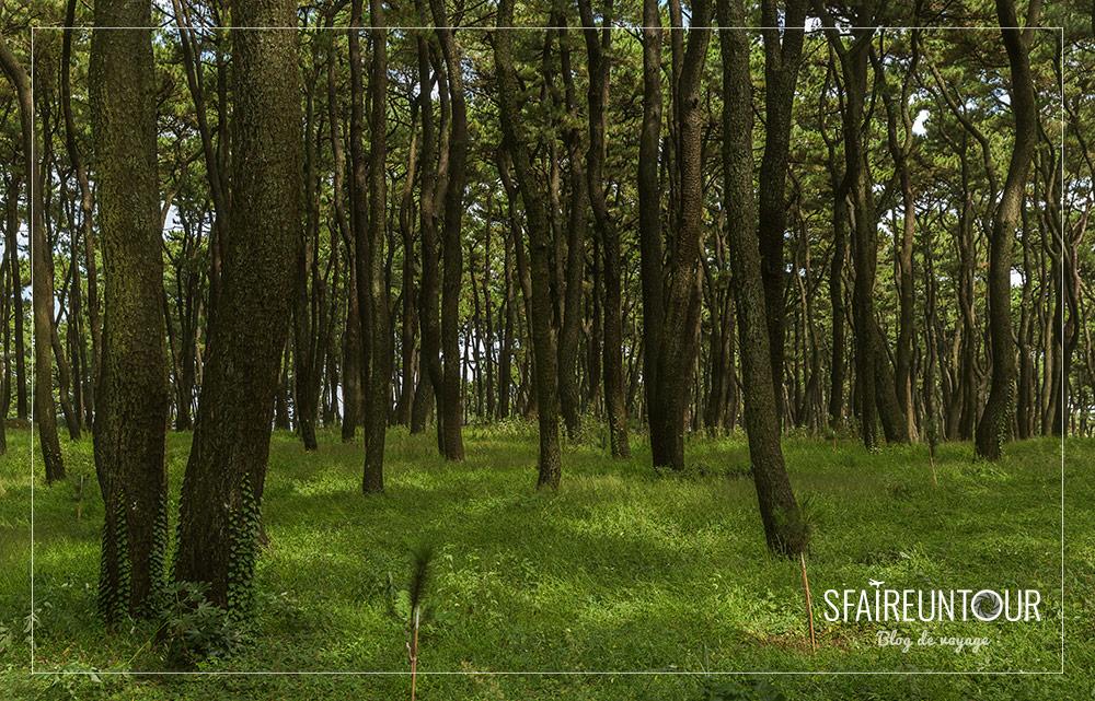 forêt du parc de Daewangan