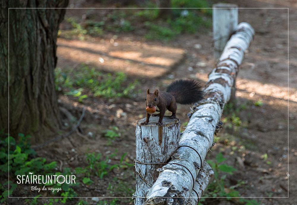 écureuil à Namisan