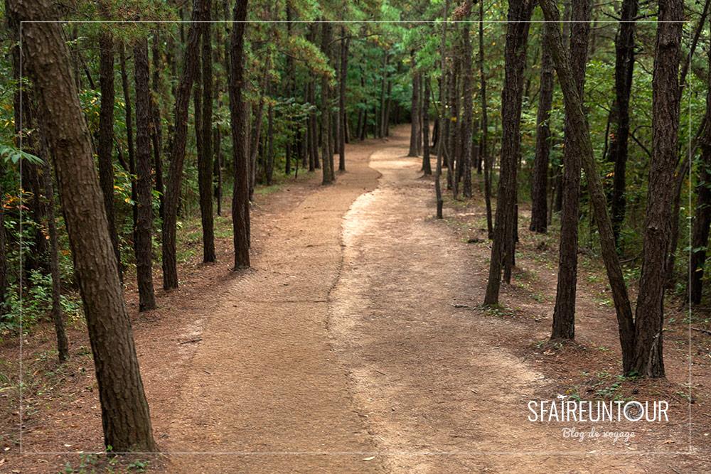 forêt de Suncheon bay